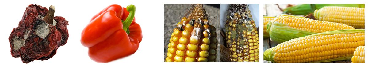 aflatoksin ürünler nelerdir